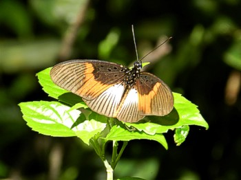 kenya-b-fly