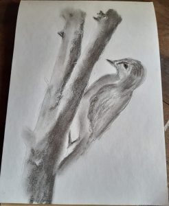 bird-charcoal